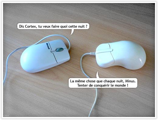 Quand deux souris blanches se rencontrent… Minus et Cortex
